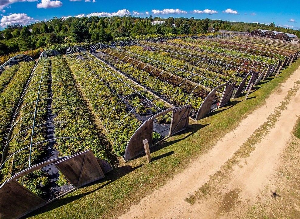 Fannin Tree Farm for a Transitional Landscape with a Perennial Plants and Southampton Farm by Warren's Nursery