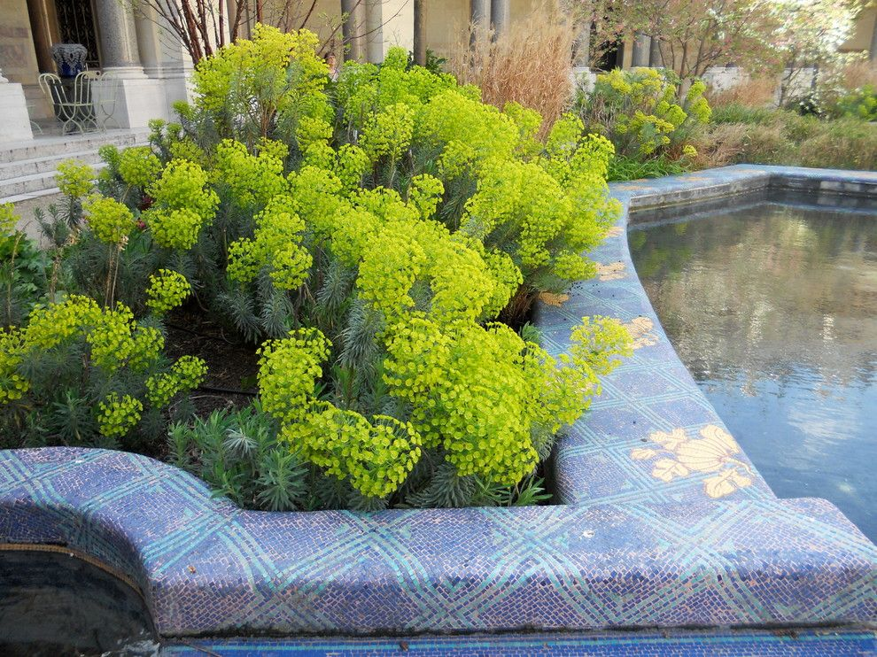 Gopher Plant for a Contemporary Landscape with a Euphorbia and Borrow Garden Ideas From Springtime in Paris by Paintbox Garden