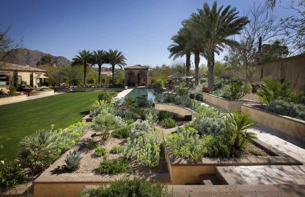Gopher Plant for a Mediterranean Landscape with a Turf and Stepped Planters by Exteriors by Chad Robert