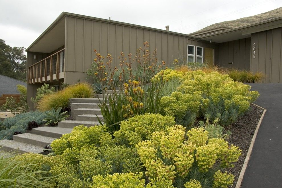 Gopher Plant for a Midcentury Exterior with a Ipe Railing and Bonifield Residence by Jeffrey Gordon Smith Landscape Architecture