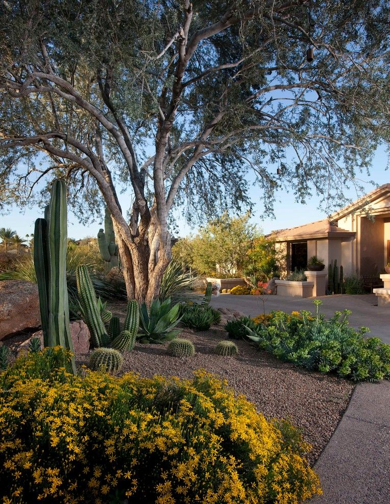 Gopher Plant for a Southwestern Landscape with a Trees and African Patio and Garden by Earth Art Landscape