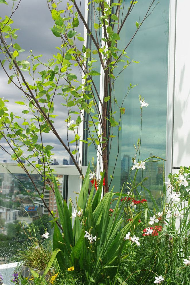 Grand Hyatt Nyc for a Modern Landscape with a Perennial Gardens and Grand Army Plaza Rooftop Garden Ii by Staghorn Nyc