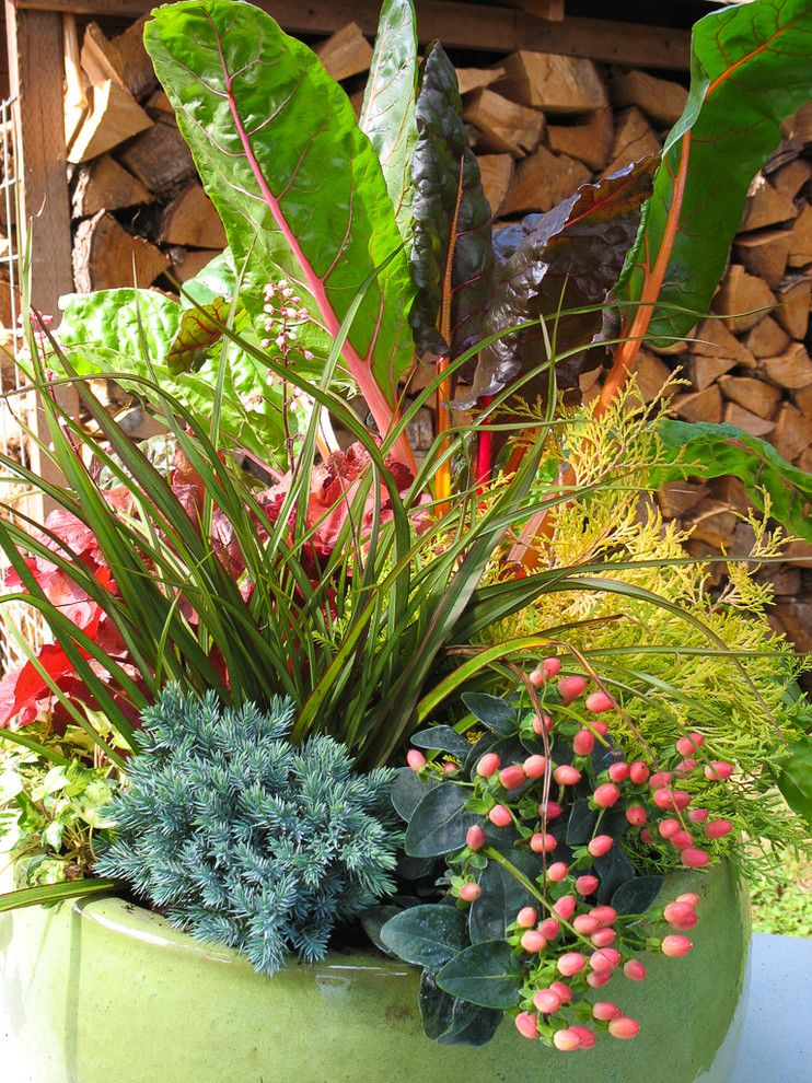 Green Thumb Ventura for a  Landscape with a Conifer and Conifers in Containers by Le Jardinet