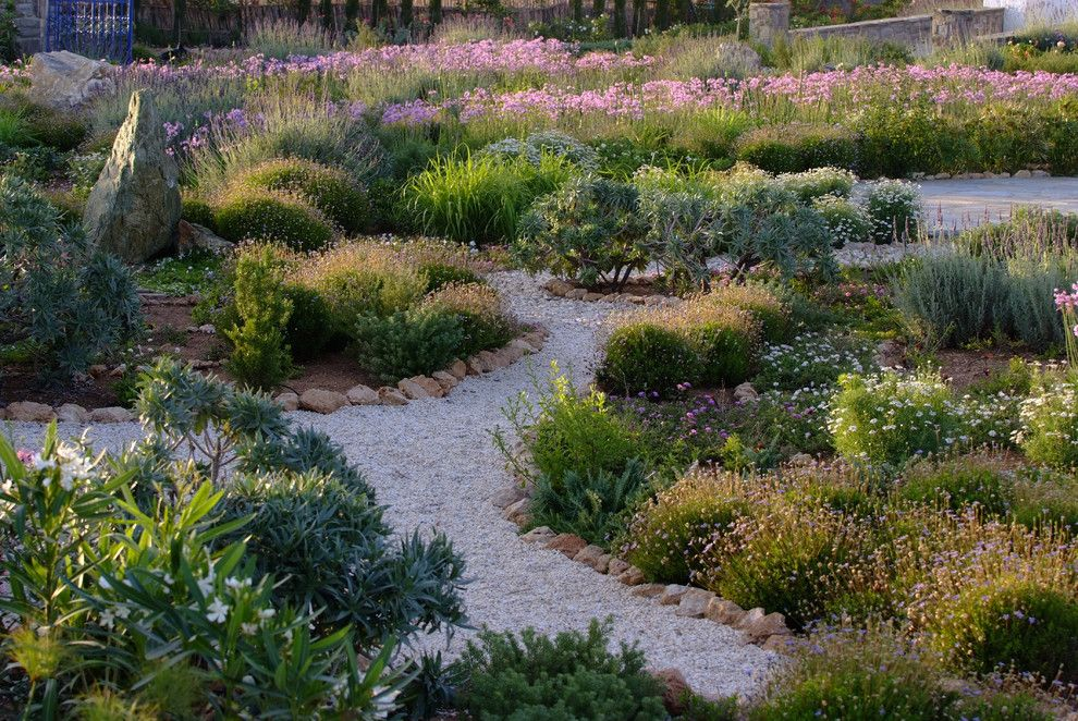 Growing Lavender From Seed for a Mediterranean Landscape with a Mass Plantings and Garden Design in Greece on the Island of Paros by Carolyn Chadwick