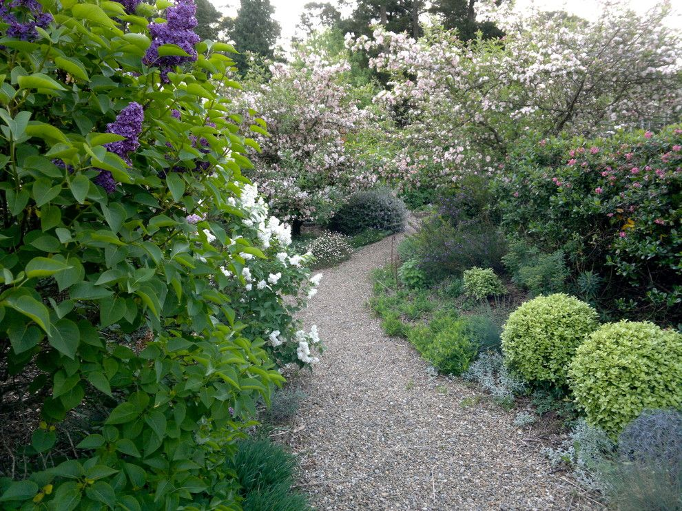 How to Clear a Clogged Drain for a Eclectic Landscape with a Pittosporum Golf Ball and Lathouris Garden by Arthur Lathouris Garden Designer