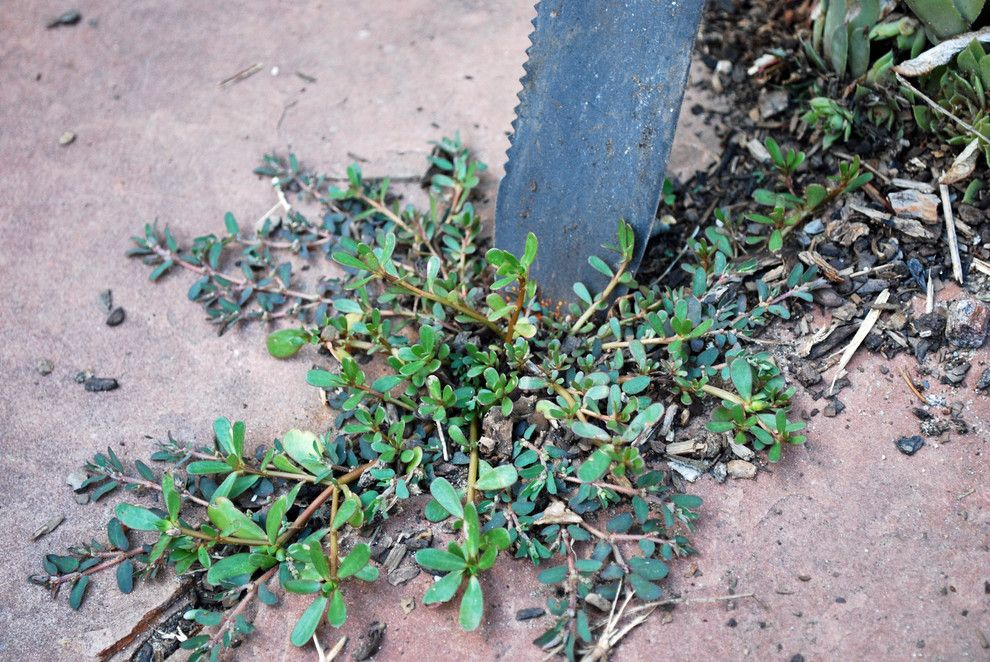 How to Get Rid of Cluster Flies for a  Landscape with a Weeding and Weeding with Hori Hori Knife by Jocelyn H. Chilvers