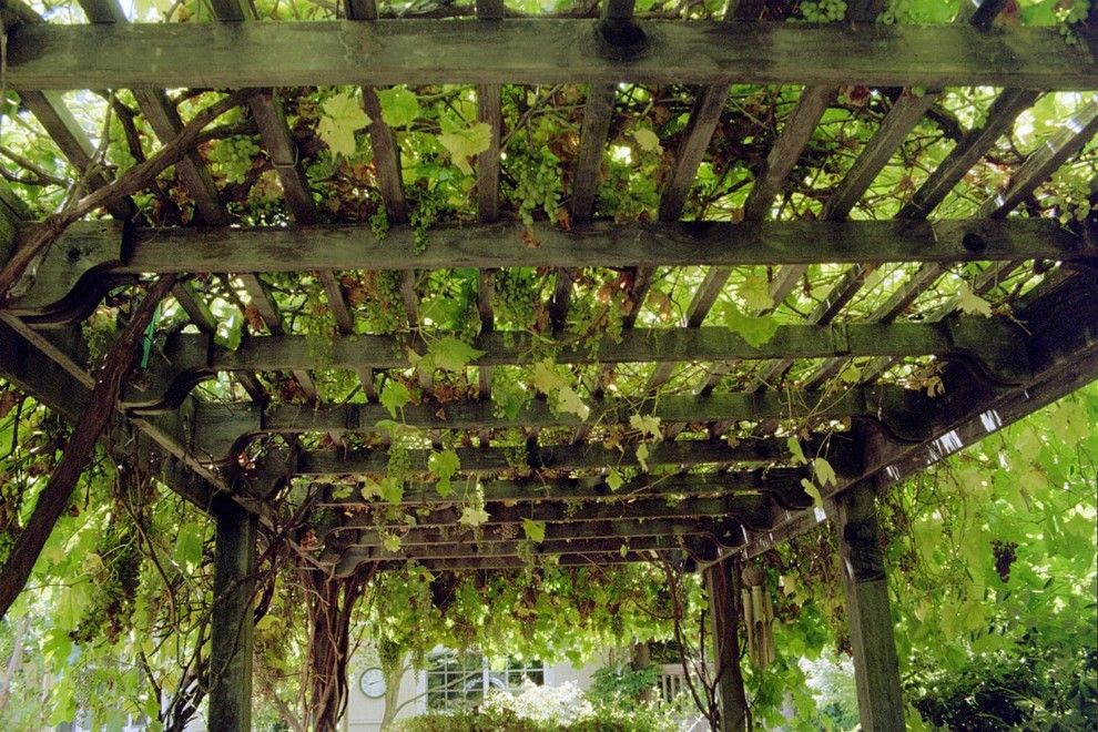 How to Get Rid of Cluster Flies for a Traditional Landscape with a Trellis and Grape Arbor   Overhead by Diane Licht Landscape Architect