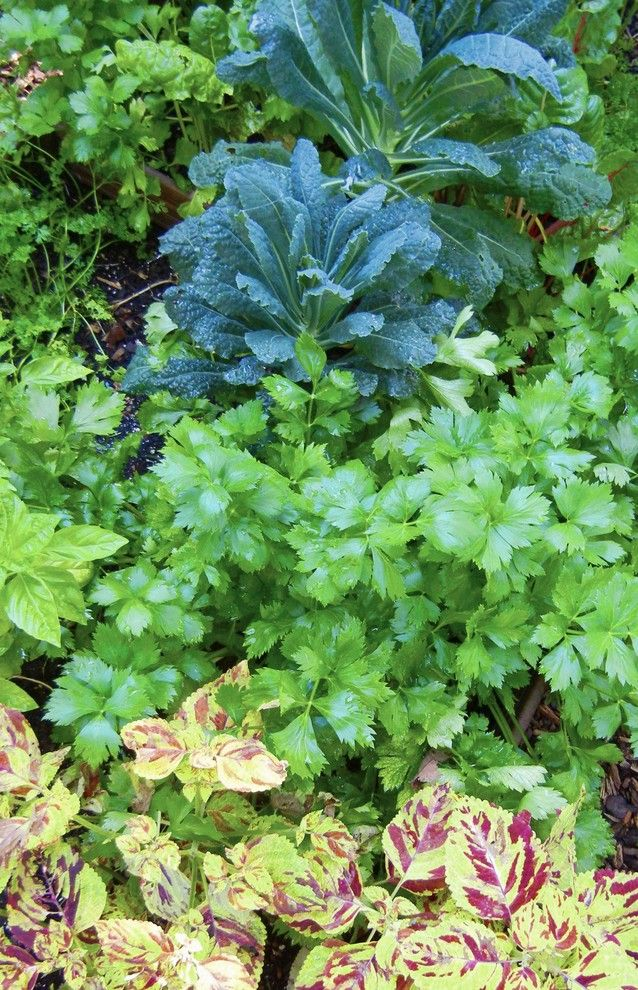 How to Grow Beets for a Eclectic Landscape with a Eclectic and a Vegetable Garden in the Shade by Shawna Coronado