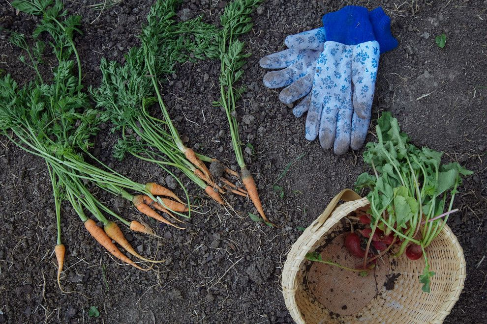 How to Grow Beets for a Farmhouse Spaces with a Farmhouse and My Houzz: Backyard Farming for a Kansas City Family by Jordana Nicholson