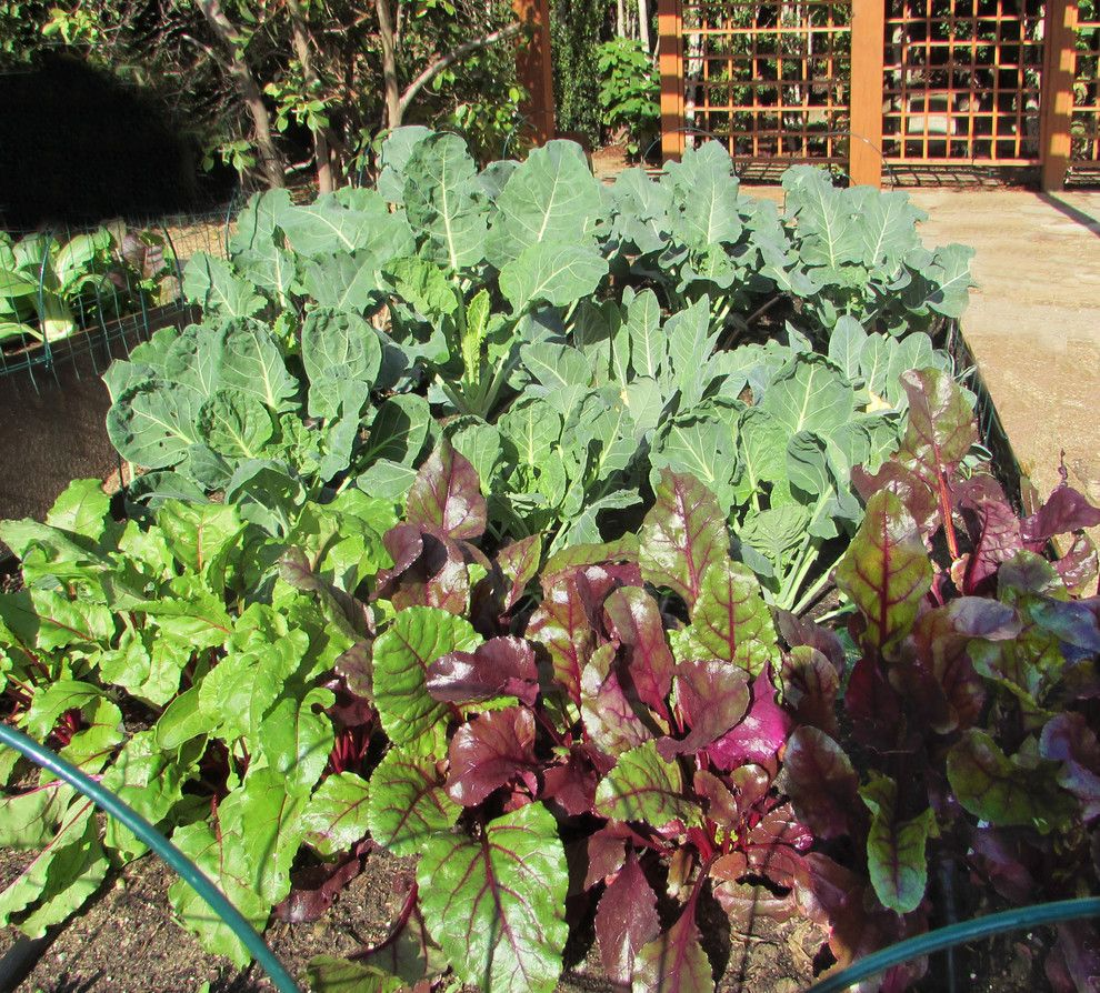 How to Grow Beets for a Mediterranean Landscape with a Apple Tree and Chic Urban Farm by Urban Oasis