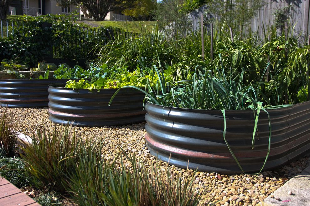 How to Grow Beets for a Modern Landscape with a Modern and Hunters Hill Garden by Sushiiphoto