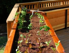 How to Grow Radishes for a Traditional Deck with a Organic Vegetable Garden and JD Garden, Hillsborough by Steve Masley Consulting and Design