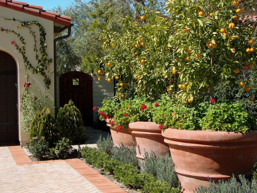 Lowes Citrus Heights for a Mediterranean Landscape with a Planters and Ams Landscape Design Studios, Inc. by Ams Landscape Design Studios, Inc.