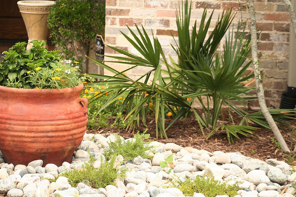 Lowes Dallas for a Traditional Landscape with a Agave and Water Efficient Landscape Renovation by Verdant Grounds