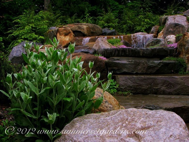 Lowes Newark De for a Traditional Landscape with a Designed Landscapes and Garden Steps Along Side a Pool Waterfall by Summerset Gardens/joe Weuste
