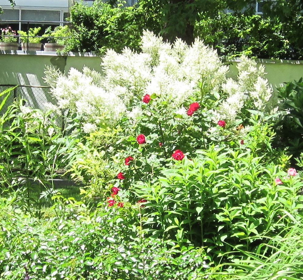 Montreal Botanical Garden for a  Landscape with a  and Red and White at Mid Summer. by Garden Guru Montreal