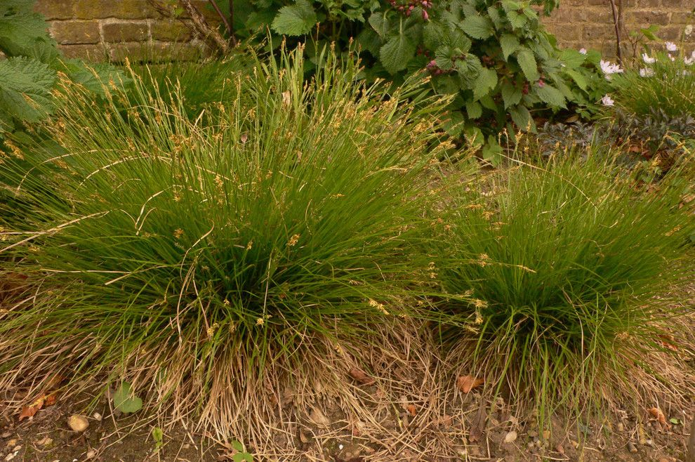 Piet Oudolf for a  Landscape with a  and Carex Eburnea by Piet Oudolf
