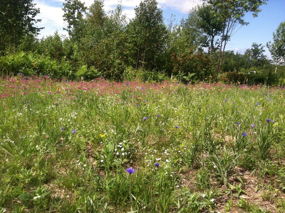 Planting Wildflowers for a Craftsman Landscape with a Wildflower and Knights Hill Conway, Nh Wildflower Meadow by C.m. Nichols Landscape Co