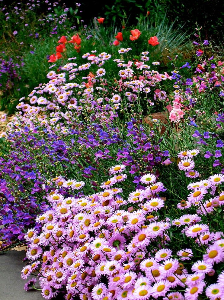 Planting Wildflowers for a Rustic Landscape with a Habitat Plant and Wildflower Combo by Edger Landscape Design
