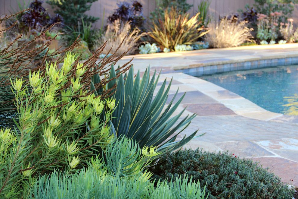 Proflower for a Contemporary Landscape with a Succulents and Dry Garden, Palos Verdes by Bliss Garden Design