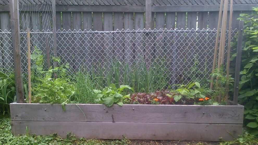 Raspberry Trellis for a  Landscape with a Urban Farm and Ahof Raised Bed Vegetable Gardens by at Home Organic Farms