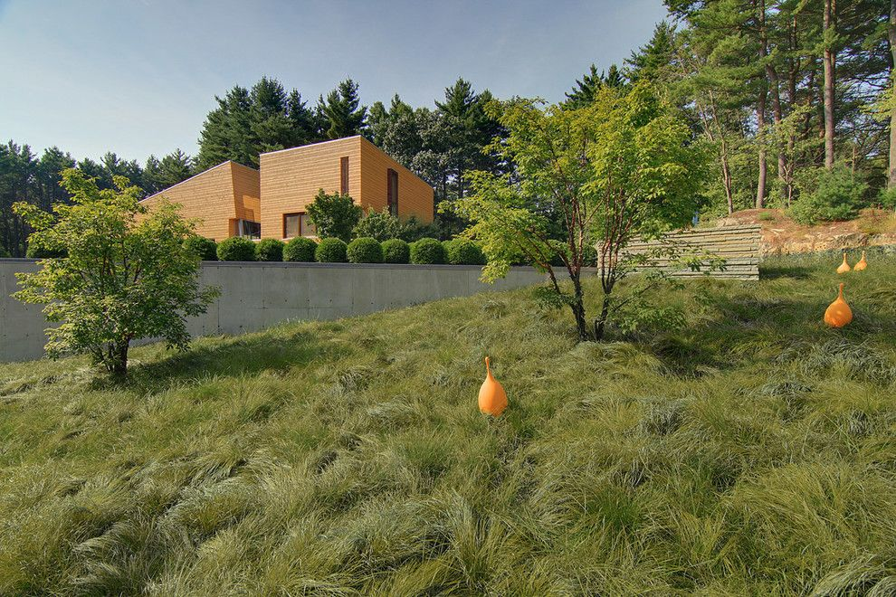 Scotts Lawn for a Contemporary Landscape with a Patio and Page Road Residence by C2 | Studio Landscape Architecture