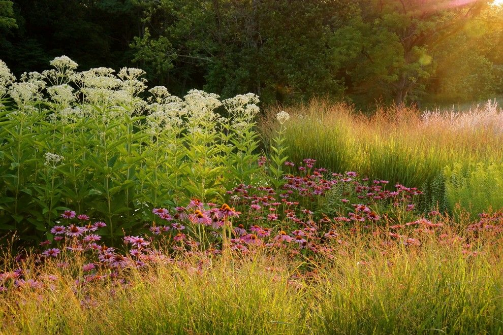 Warm Season Grasses for a Contemporary Landscape with a Contemporary and Jones Road by Adam Woodruff + Associates, Garden Artisans