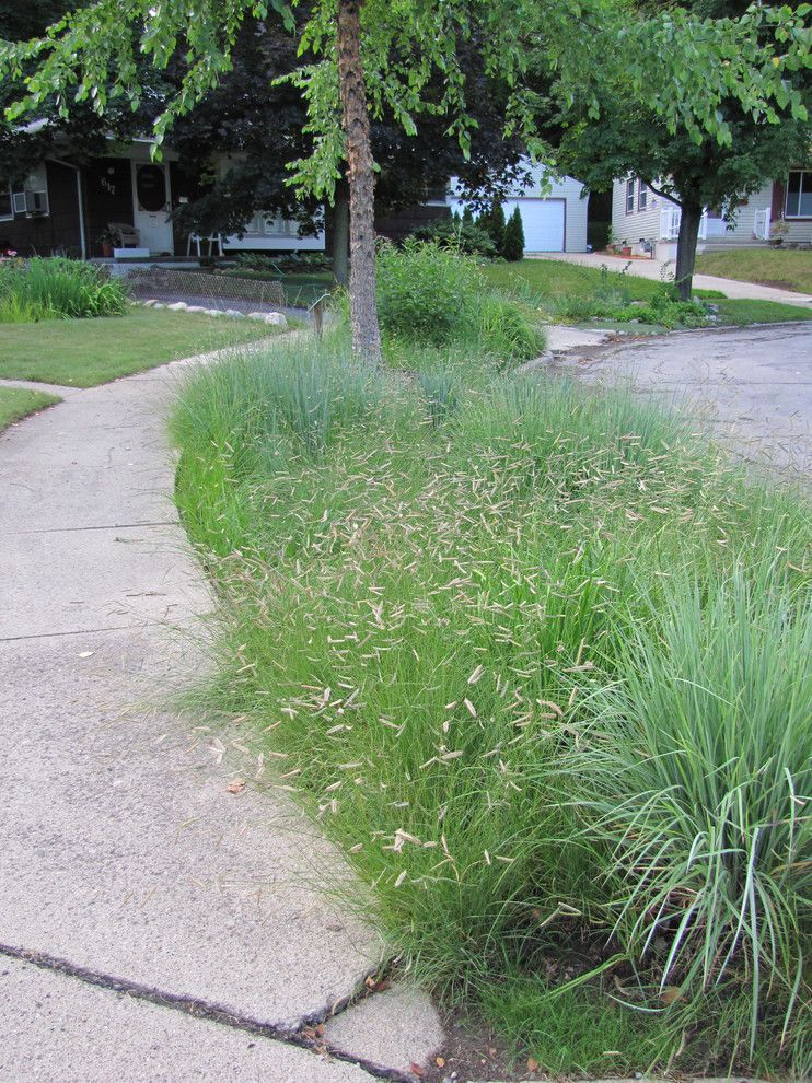 Warm Season Grasses for a Contemporary Landscape with a Prairie Grasses and Home Landscape Using Only Native Plants by Creating Sustainable Landscapes, Llc