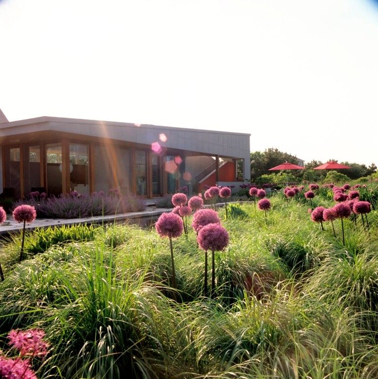 What is Milkweed for a  Landscape with a Long Island and Sagaponack, Ny by Oehme, Van Sweden Landscape Architecture