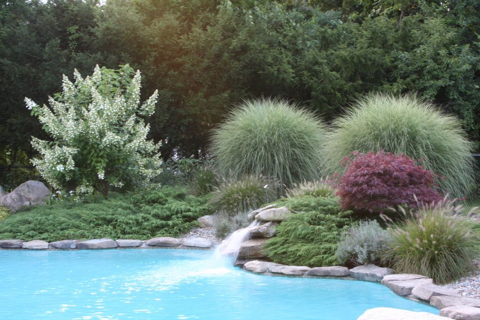 Winston Flowers Boston for a Contemporary Pool with a Japanese Maple and Poolside Oasis by Amy Martin Landscape Design