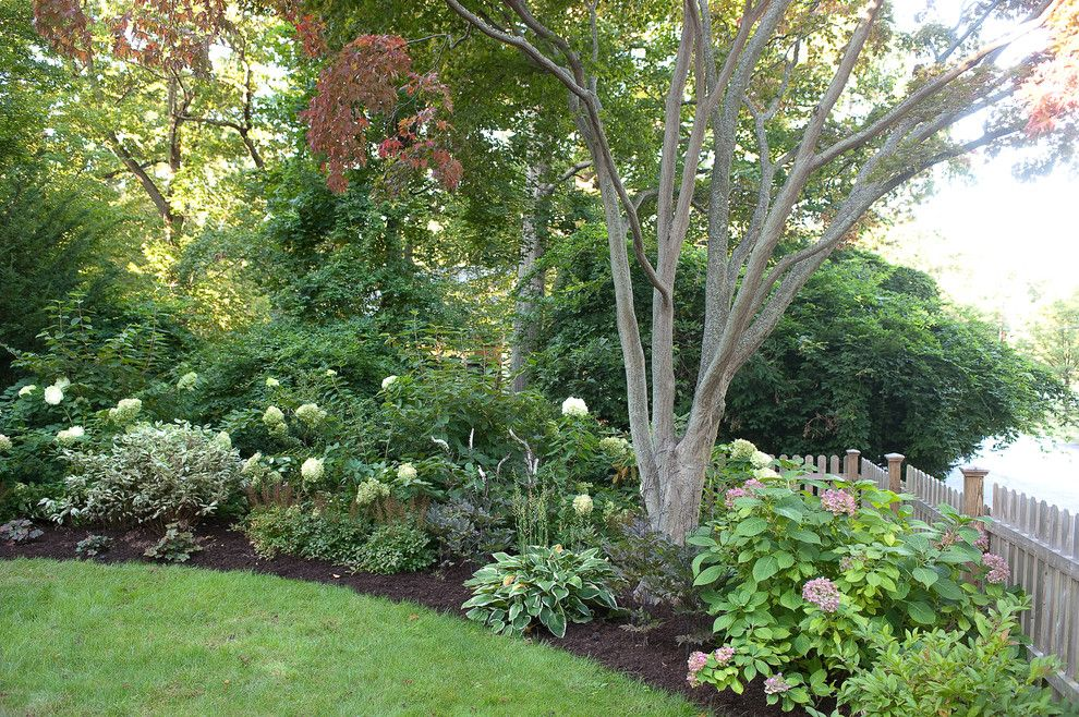 Woerner Turf for a Traditional Landscape with a Redtwig Dogwood and Less Lawn More Garden by Westover Landscape Design, Inc.