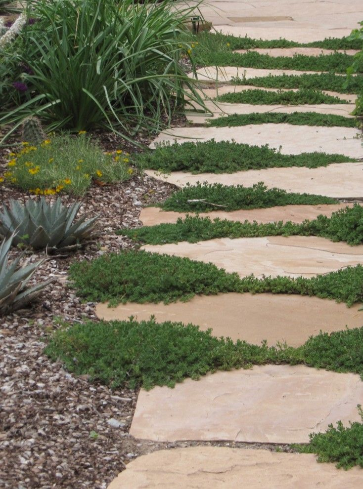 Xeric for a Asian Landscape with a Low Water and Santa Fe Permaculture/ Xeric Garden by Permadesign, Inc.