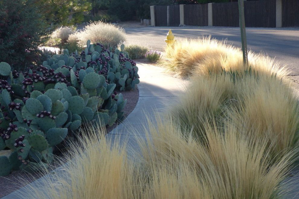 Xeric for a Southwestern Landscape with a Texture and Valley Xeric by Waterwise Landscapes Incorporated